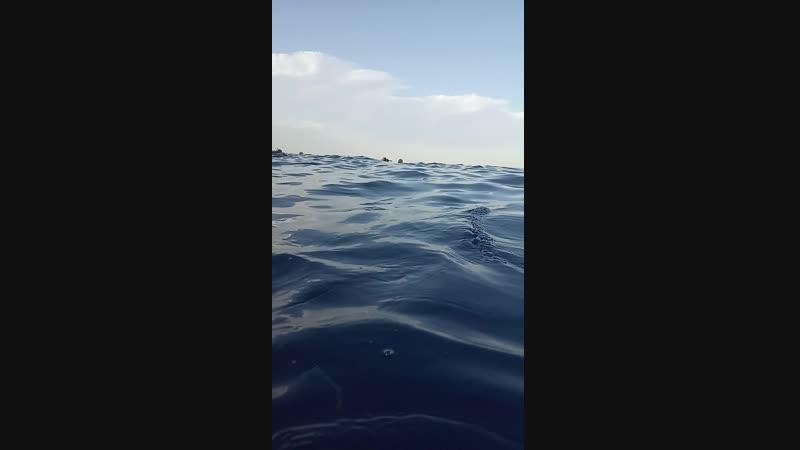 дайвинг. красное море. Шарм-Эль-Шейх
