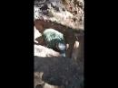 капаем могилу