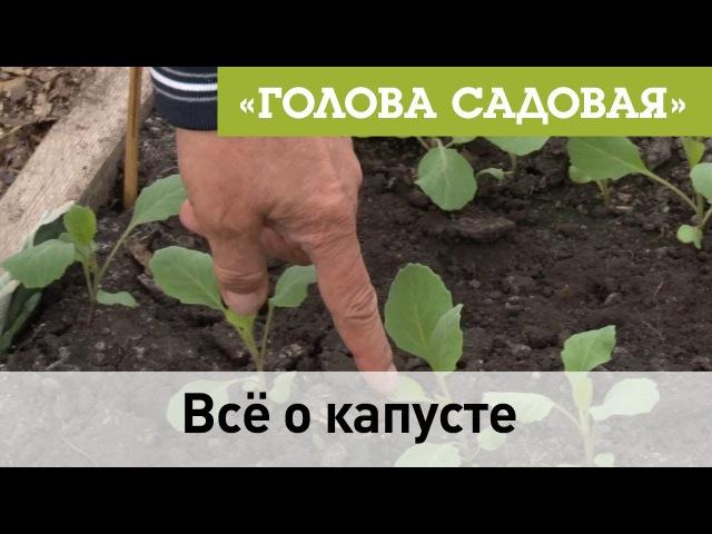 Голова садовая Все о капусте