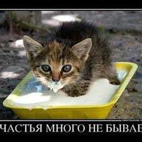 Миша Антипов, 30 августа , Александров, id156574175