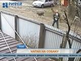 Пермяк получил 10 месяцев ограничения свободы за убийство собаки