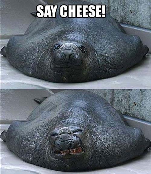 """скажи """"сыр"""""""