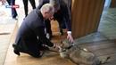 Вучич подарил Путину щенка шарпланинской овчарки по кличке Паша