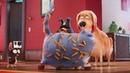 Котовасия крупным планом Отрывок из мультфильма Тайная жизнь домашних животных