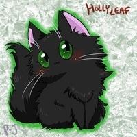 Картинки остролистой коты воители