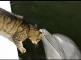 Дельфин и котик