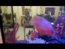 Рабочие моменты. Салон красоты. Аквариум после чистки. Евгений Кабыкин - специалист по обслуживанию пресноводных аквариумов. Тю
