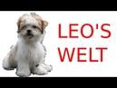Leo's Welt - Schleppleine die Zweite