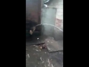 Вор залез во двор, украсть курицу, но хозяин вышел во двор и мужик хотел спрятаться в туалете. Когда он туда вбежал пол провалил