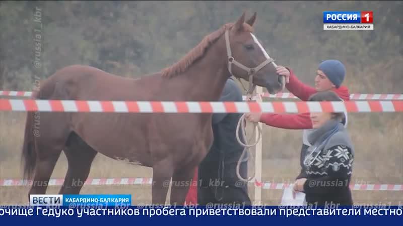 Баксан/ежегодные дистанционные конные пробеги на лошадях кабардинской породы ... октябрь 2018 года...