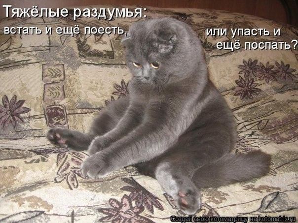 Кошачий юмор - Страница 4 YuRO_Ua4A6I