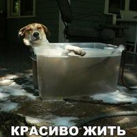 Ксения Пешехонова