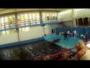 Представление в Карадагском Дельфинарии Биостанция