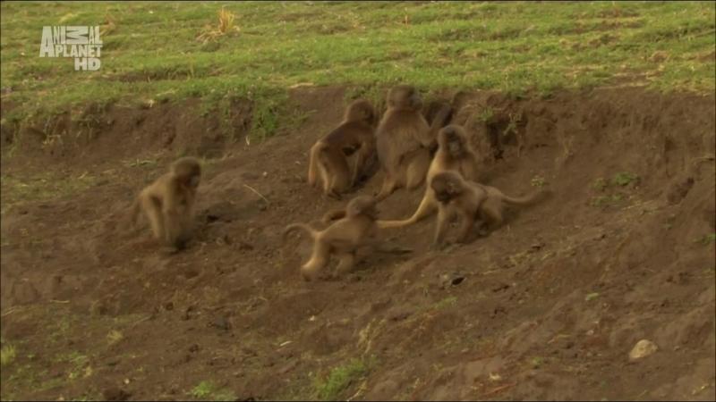 В дебрях Африки (2010) (2 серия)