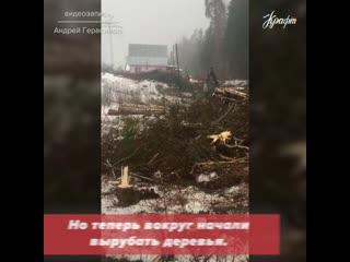 У родника на Фазе вырубают деревья 🌲