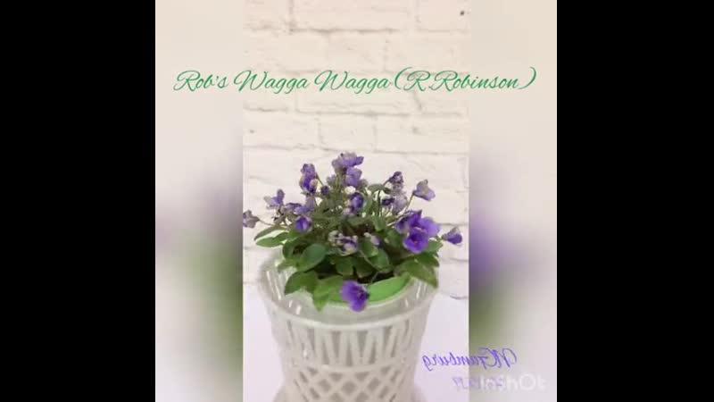 Rob's Wagga Wagga (R.Robinson)