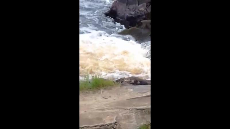 Водопад Ахвенкоски на реке Тохмайоки. Сортавальский район, Карелия.