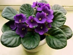 чернаямагия - Магия растений. Магические свойства растений. Обряды и ритуалы. Амулеты и талисманы из растений.  OcRhd-Vbtok