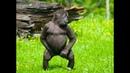 Dancing Monkeys