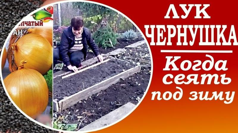 Выращивание лука с нуля Сеем лук чернушка под зиму