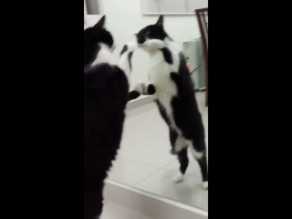 This cat makes you believe that there is another identical cat on the other side, purrfectly mirroring every move...  Join o
