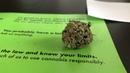 Первый день легалайза в Канаде/ first day when cannabis is legalized