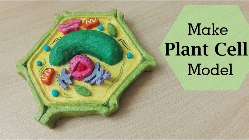 Simple and Easy way to make plant cell model |3d styrofoam carving