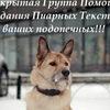 ๑۩๑ *V.I.P.*Тексты для пиара кошек и собак!๑۩๑ *