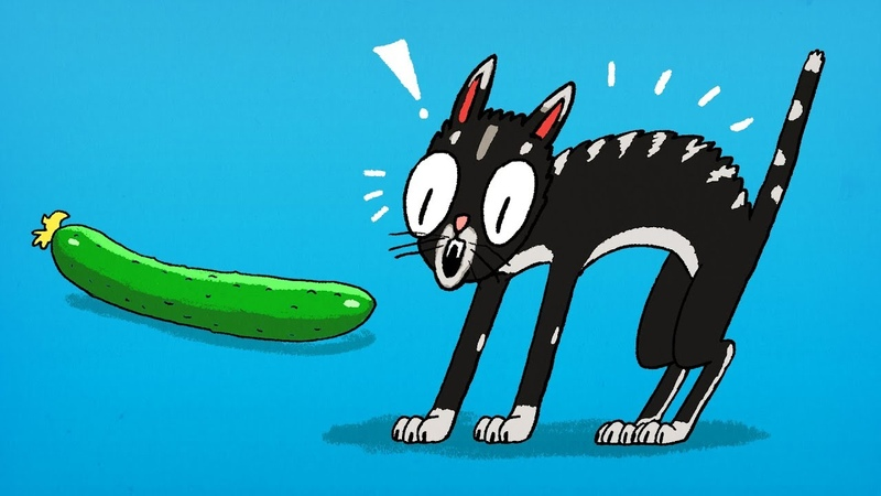 Why Cats Are Sooo Scared of Cucumbers?
