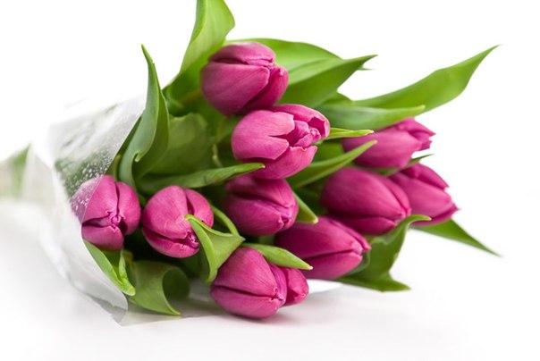 """Картинки по запросу """"Цветы марта"""""""""""