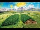 Бүкіл Қазақстандық ағаш отырғызу акциясы
