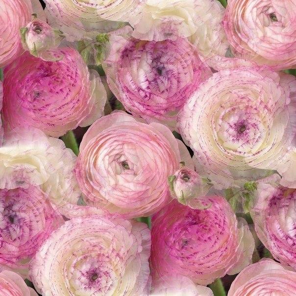 Цветочные и растительные фоны - Страница 3 0OxypWYyvys
