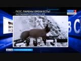 Вести в сети #310. Собачий конфликт, беличий досмотр и пернатый променад