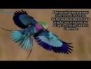 10 самых необычных птиц, о которых вы, возможно, не слышали - Часть 1 ( 720 X 1280 ).mp4