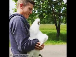 Животные тоже знают толк в обнимашках