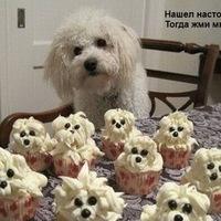 Санёк Лопарёв, 15 апреля , Кемерово, id206290290