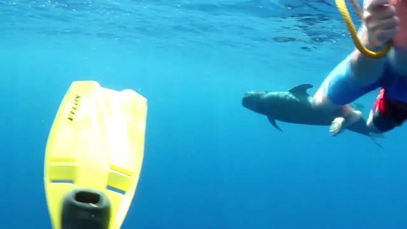 Спросите Лиззи телеведущая показала, где можно увидеть китов и акул в Великобритании