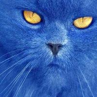 Игры про синего кота