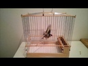 Fabrication cage chardonneret en bois