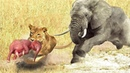 LIVE: AMAZING Elephant's Terror Powers, Destroy 20 Lion To Save Baby,Top Fight Of Wildlife