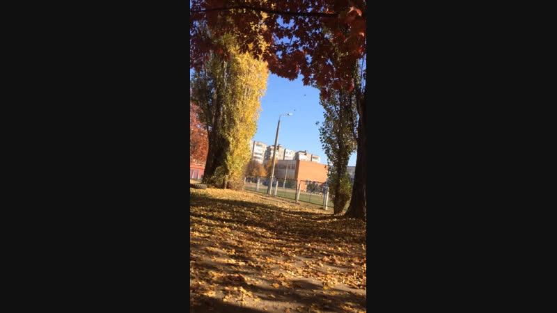 Листья падают медленно