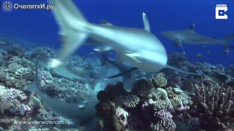 Акула срывает маску с водолаза