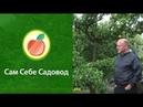Защита плодов от ос