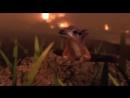 Армагеддон животных - Вымирание мелового периода, судный день. 5 фильм