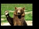 Рассказ медведя о встрече с егерем. Стихи. исполнение - Н. Князев, муз. народная