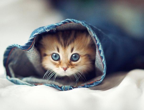 ...котята в мире: фото японского котенка Дейзи.