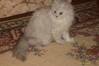 Мария Нестерова, 2 ноября , Кременчуг, id171101288