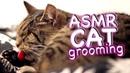 ASMR Cat Grooming 23