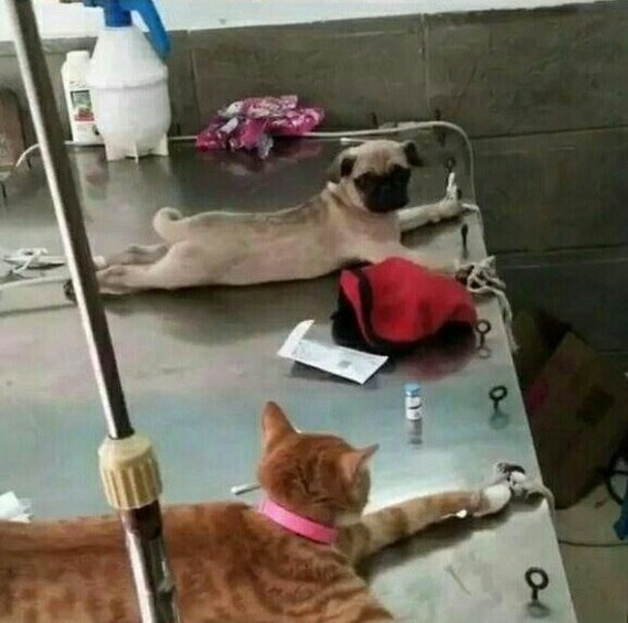 На приёме у ветеринара...