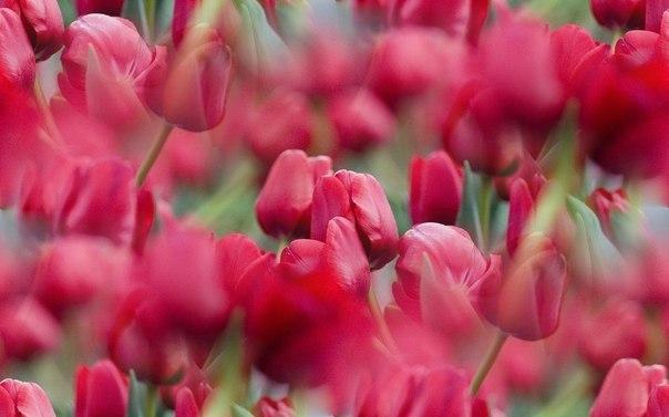 Цветочные и растительные фоны - Страница 3 SQf75z3AEhQ